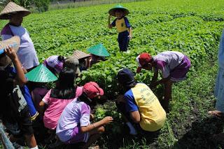 Wisata Petik Sayur Di Batu Malang